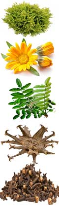 Биосистема состав